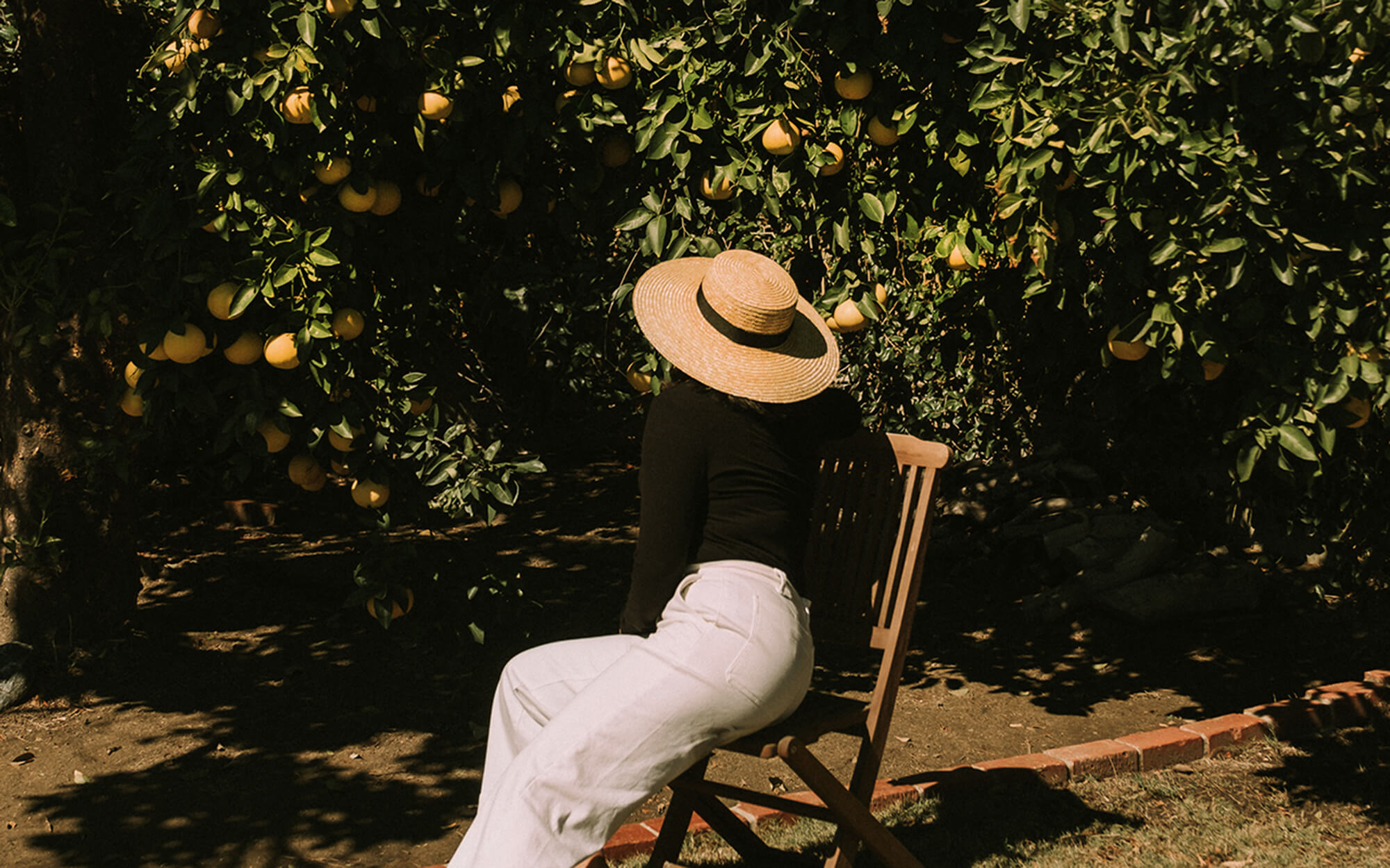Citrus Trees - Kayla Mendez Photography