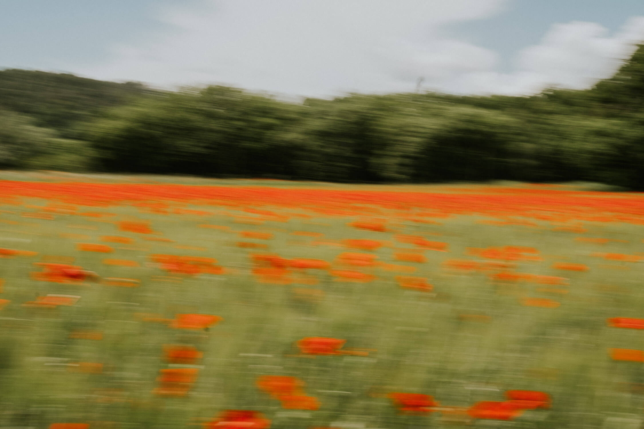 poppy fields, impressionism, france, provence