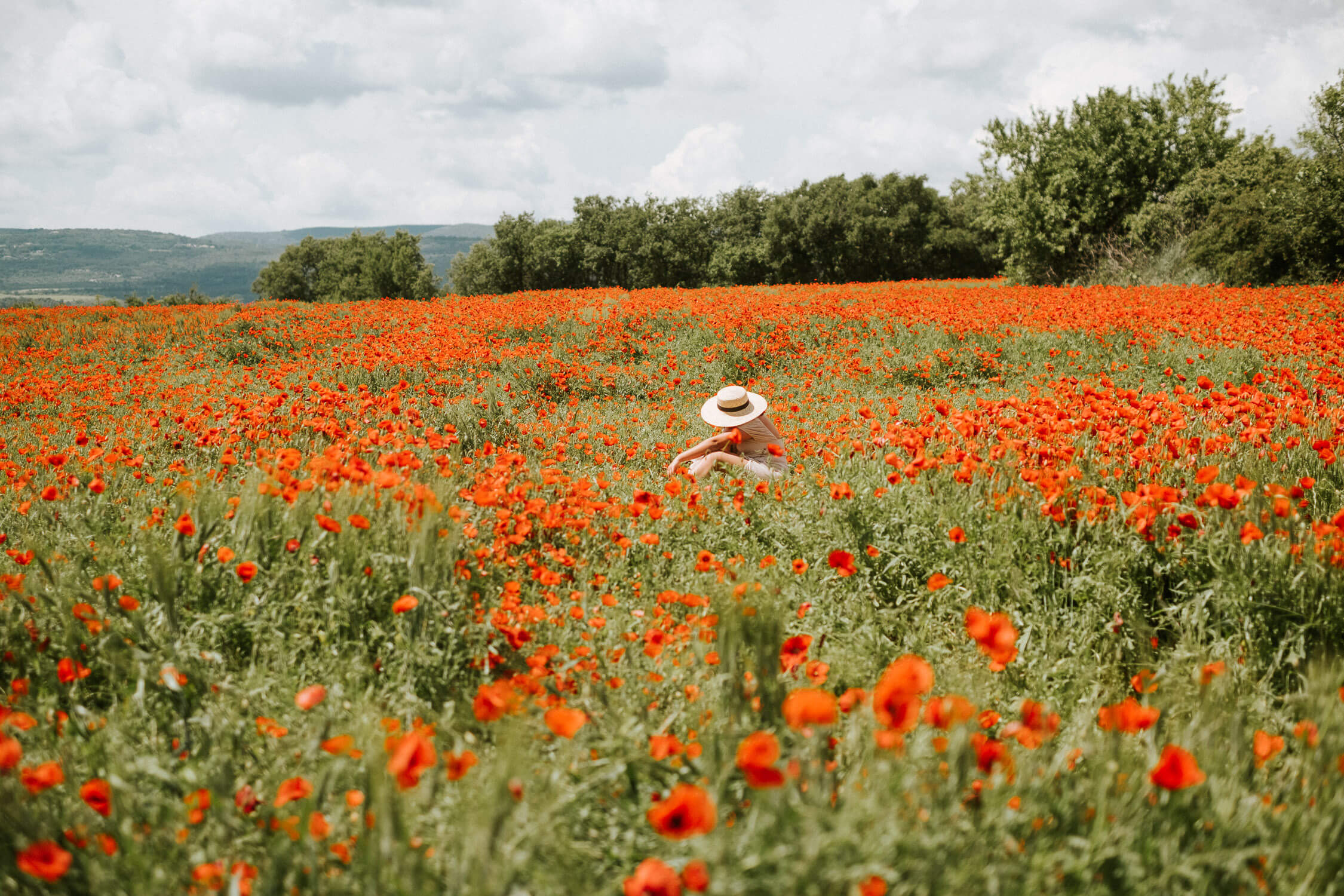 poppy fields, france, red poppies, provence, aix en provence, provence guide